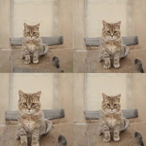 cat_top-min